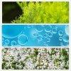 Пенка для умывания The Saem Healing Tea Garden Tea Tree Cleansing Foam